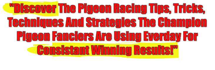 Discover the pigeon racing tips, tricks, techniques and strategies the champion pigeon fanciers are using everyday for consistant winning results.