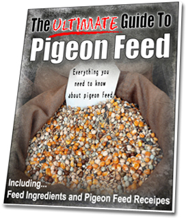 Fast Action Bonus #7 : Ultimate Guide to Pigeon Feed