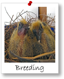 Module 4: Breeding And Mating