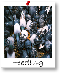 Module 3: Feeding And Nutrition
