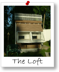 Module 1: The Loft & Loft Management
