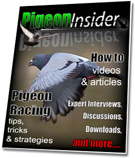 Pigeon Training, The Pigeon Insider